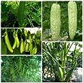Chaywichan shop / Thai Organic seed. (Bitter Gourd, Eggplant, Ridge gourd, Okra, Winged Bean), Thailand.
