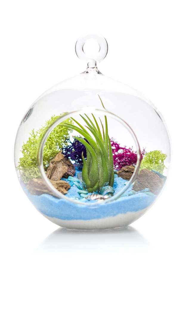 "Air Plant Terrarium Kit | Ocean Series Blue & Green | Complete Tillandsia Gift Set | 4"" Glass Globe 