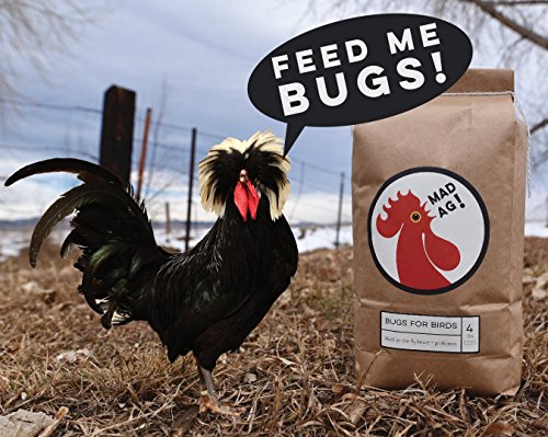 Mad Agriculture Bugs For Birds   4Lbs Poultry Feed Supplement  Dried Black Soldier Fly Larvae  With Added Probiotics