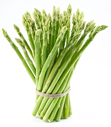 Millennium Asparagus Large Crowns - All Male - Non-GMO - Top Producing Variety-Northwest Grown (10 Crowns) - Hybrid Asparagus