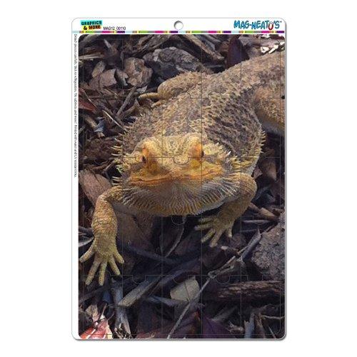 Graphics and More Bearded Dragon Beardie Lizard Reptile M...