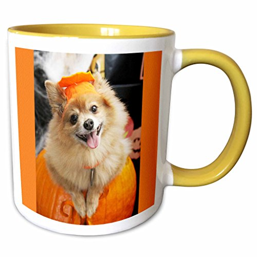 3dRose RinaPiro - Halloween - Halloween dog. Puppy dressed in Halloween costume. - 11oz Two-Tone Yellow Mug (mug_221545_8)