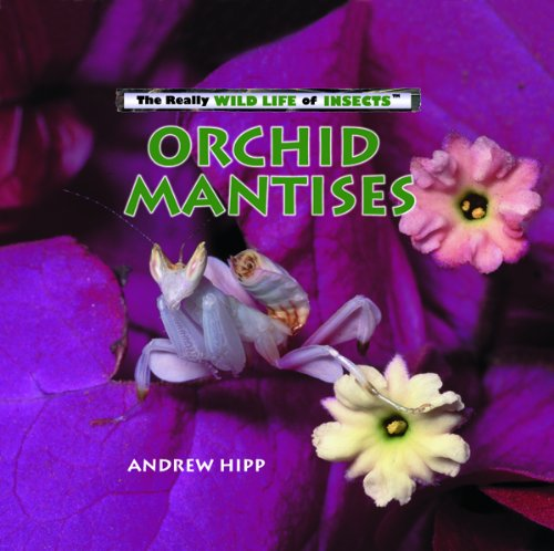 (Orchid Mantises (Really Wild Life of Insects))