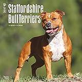 Staffordshire Bull Terriers 2017 Wall Calendar