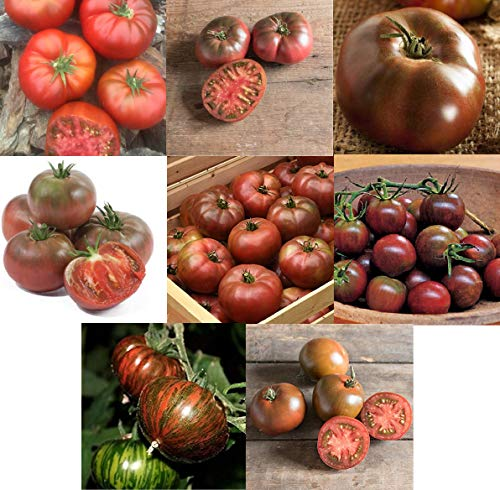 - David's Garden Seeds Collection Set Tomato Black TB2381 (Multi) 8 Varieties 350 Non-GMO, Organic, Open Pollinated, Heirloom Seeds