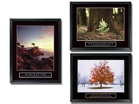 Amazon.com : 3 Framed Tree Motivational Posters Aspen Pine : Prints ...