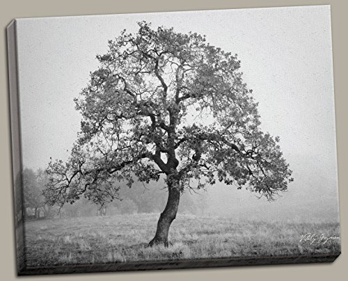 Burning Oak; Stunning Black and White Oak Tree Photograph Printed on Canvas; One 20x16 Hand-Stretched Canvas (Oak Tree Vintage)