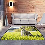 """Collection Area Rug,Alaskan Malamute,Klee Kai Puppy Sitting on Grass Looking Up Friendly Young Cute Animal,Extra Large Rug,6'6""""x8'10"""" Multicolor 8"""