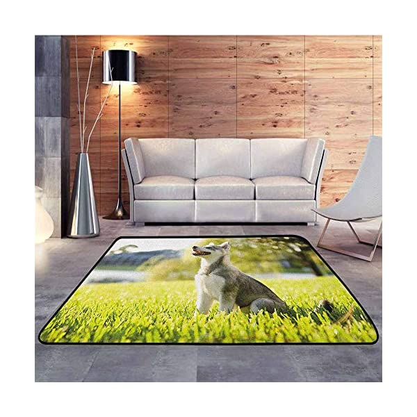 """Collection Area Rug,Alaskan Malamute,Klee Kai Puppy Sitting on Grass Looking Up Friendly Young Cute Animal,Extra Large Rug,6'6""""x8'10"""" Multicolor 2"""