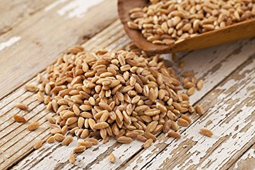 BARLEY HULLED- 22lb by Dylmine Health