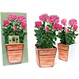"""POP-UP CARD """"PAPER ROSES"""": A folded 3-D-card of beautiful roses in a flower pot - they can easily stand on your table - an elaborate birthday or valentine card"""