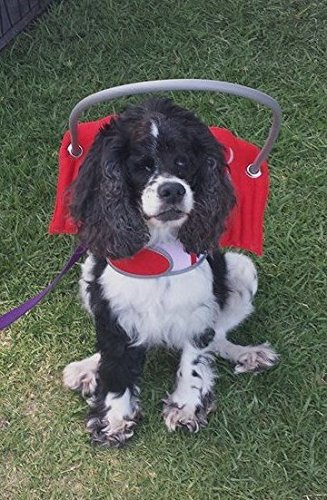 Muffin's Halo Guide For Blind Dogs - Angel Wings Red (XL)