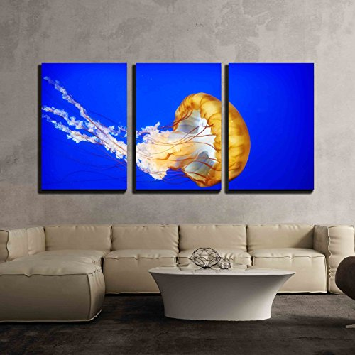 wall26 3 piece canvas wall art orange jellyfish chrysaora fuscescens or pacific sea nettle in blue ocean water modern home decor stretched and