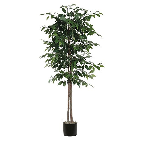 Vickerman TEC0160-07 Everyday Ficus Tree, Green Dark, 6' by Vickerman
