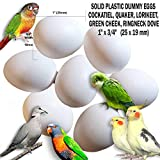 """Fake Bird Eggs Stop Laying! Dummy Eggs for Cockatiel, Quaker Parrot, Green Cheek, Lorikeet, Ringneck Dove. White Solid Plastic Realistic 1"""" x 3/4"""" / 25 x 19mm (Set of 7)"""