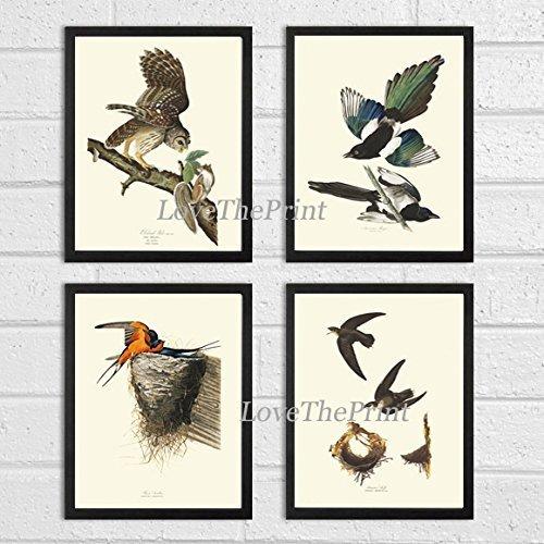 Bird Print Set of 4 Art Beautiful James Audubon Barred Owl American Magpie Barn Swallow Swift Home Wall Room Decor Unframed