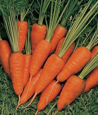 Short 'N Sweet Carrot 200 Seeds #8130 Item Upc#650348691752