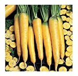 buy David's Garden Seeds Carrot Yellowstone SL9374 (Yellow) 500 Open Pollinated Seeds now, new 2020-2019 bestseller, review and Photo, best price $6.95