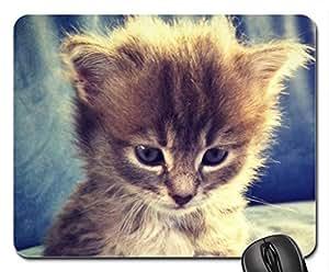 Attentive Beauty. Cute Cool Decorative Design Animal Cat Mousepad Rainbow Designs