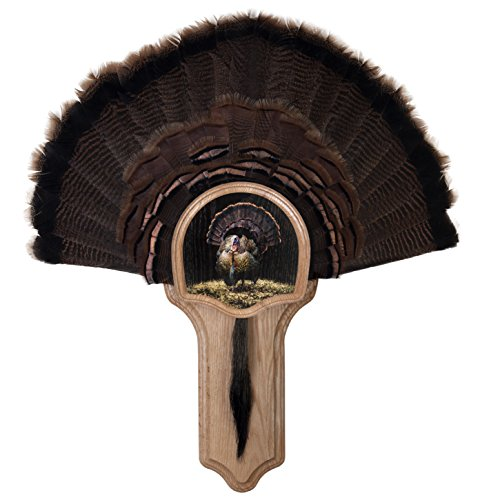 Walnut Hollow Country Deluxe Turkey Mounting & Display Kit, Oak with Full Fan ()
