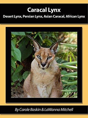 Caracal Lynx Desert Lynx Persian Lynx Asian Caracal African Lynx