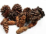Scents of the Seasons Cinnamon Scented Natural Pine Cones for Holiday Decorations & Home Decor - 12 ounce Bag