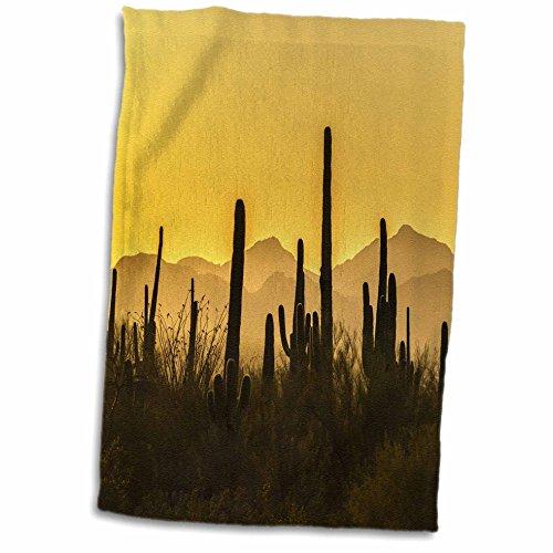 3dRose Danita Delimont - Deserts - USA, Arizona, Saguaro National Park. Sonoran Desert at sunset. - 15x22 Hand Towel (twl_278438_1) Sonoran Desert Saguaro National Park
