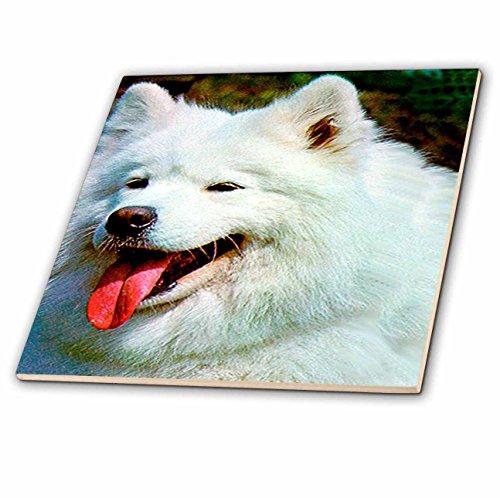 (Dogs Samoyed - Samoyed - 8 Inch Glass Tile (ct_505_7))