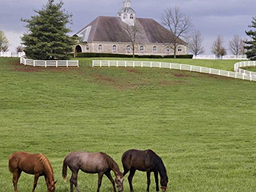 Donamire Horse Farm In Lexington Kentucky -Oil Painting On Canvas Modern Wall Art Pictures For Home Decoration Wooden Framed (12X16 Inch, Framed) ()