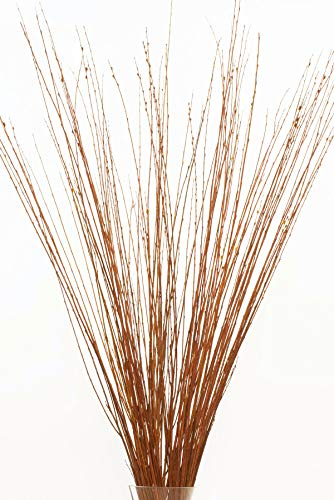 Green Floral Crafts 3-4 ft Tall Pumpkin-Pecan Asian Willow, Bunch of 50-60 Tall Sticks (Vase Not Included)