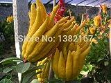 Shopvise 30Pcs /Bag Jinhua Bergamot Plant Finger-Citron Bergamot, Vegetable Plant for Home Plant Garden