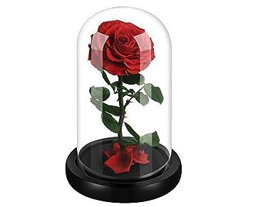 Amazonde Intignis Für Ihre Echte Natürliche Konservierte Rote Rose