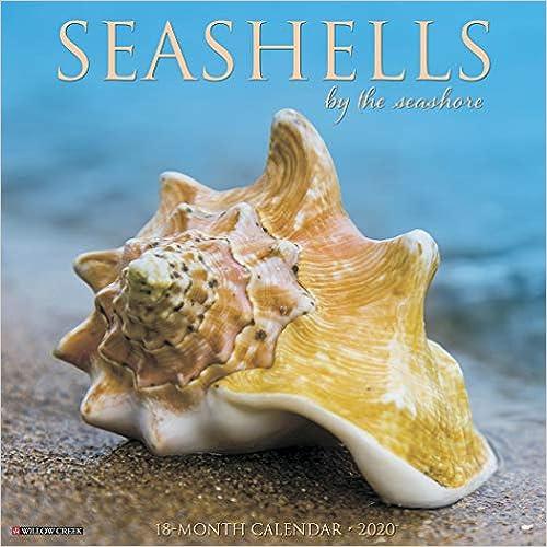 Sea Shells 2020 Wall Calendar