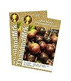 Thai Star Apple Chrysophyllum cainito 10 Seeds ThailandMrk