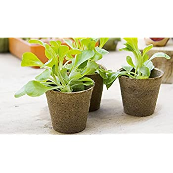 Culinary Herb Growing Kit (5 Varieties   Basil, Cilantro, Thyme Parsley, And