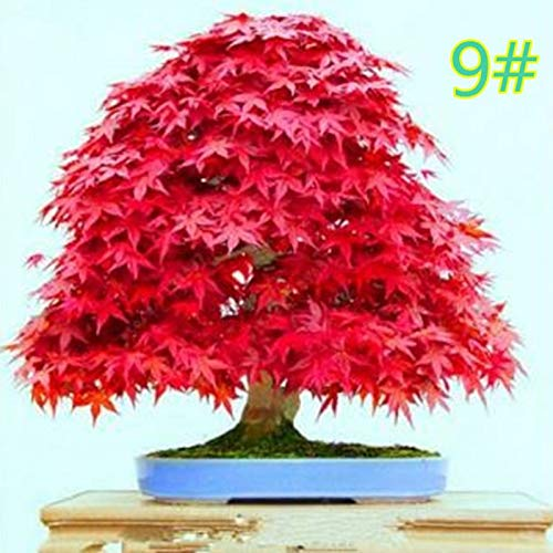 - Artificial Plants - Japanese Maple Seed Bonsai Diy Plant Flower Pot Colorful Leaves Creative Household Home Mini - Silk Stem Cabinets Decorations Hanging Outside Topiary Leaves Clearance Lemo