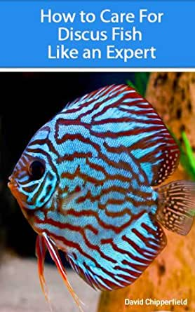 discus fish for sale free shipping
