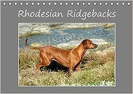 Rhodesian Ridgebacks (Tischkalender 2017 DIN A5 quer): Ein