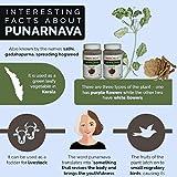 Herbal Hills Punarnava Powder - 100g Each