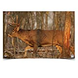 Birchwood Casey 37481 EZE-Scorer Deer 23x25