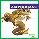 Amphibians (Animal Classification)