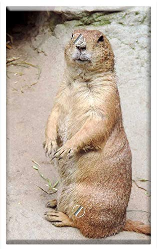 Single-Gang Blank Wall Plate Cover - Marmot Rodent Croissant Mankei Gophers ()