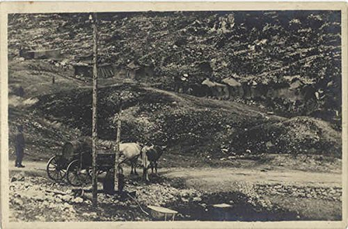 Horses, Wagon - Mining Camp Cows & Cattle Original Vintage Postcard ()