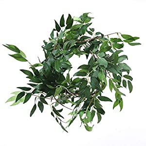 Felice Arts 2pcs 11.2 Feet Artificial Willow Leaves Vines Twigs Fake Silk Greenery Garland for Indoor Outdoor Wedding Decor Jungle Party 5