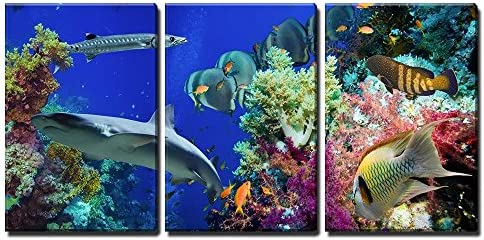Tropical Anthias Fish with Net Fire Corals and Shark on Red Sea Reef Underwater x3 Panels