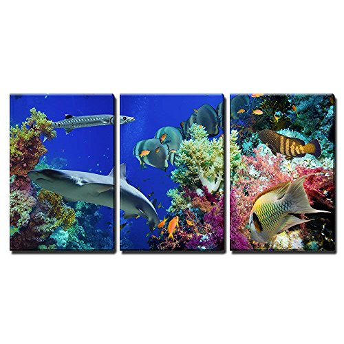 wall26 - 3 Piece Canvas Wall Art - Tropical Anthias Fish with Net Fire Corals and Shark on Red Sea Reef Underwater - Modern Home Decor Stretched and Framed Ready to Hang - 24