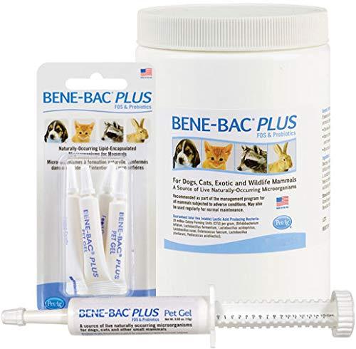 PetAg Bene-Bac Pet Gel, 15 Gram Syringe