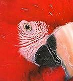 Birds, Deni Bown and Dorling Kindersley Publishing Staff, 0789429314