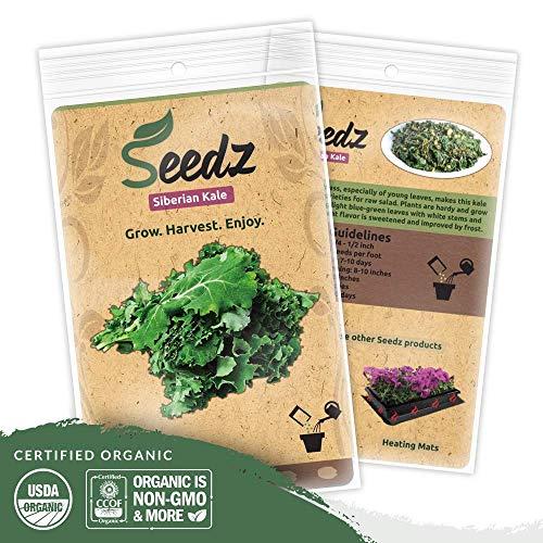 Organic Kale Seeds (APPR. 550) Siberian Kale - Heirloom Vegetable Seeds - Certified Organic, Non-GMO, Non Hybrid - ()