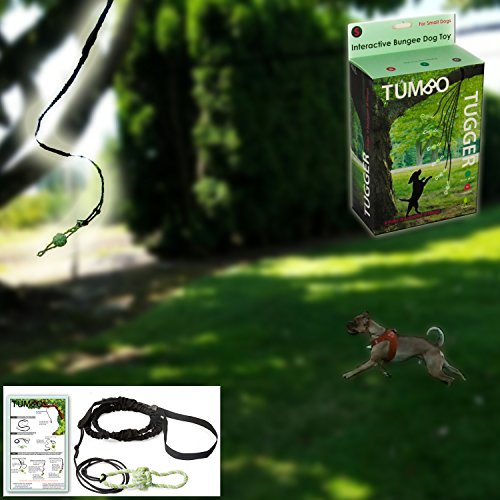 Small Tumbo Tugger outdoor hanging bungee dog toy